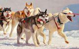 enttre-chiens-et-loups_19