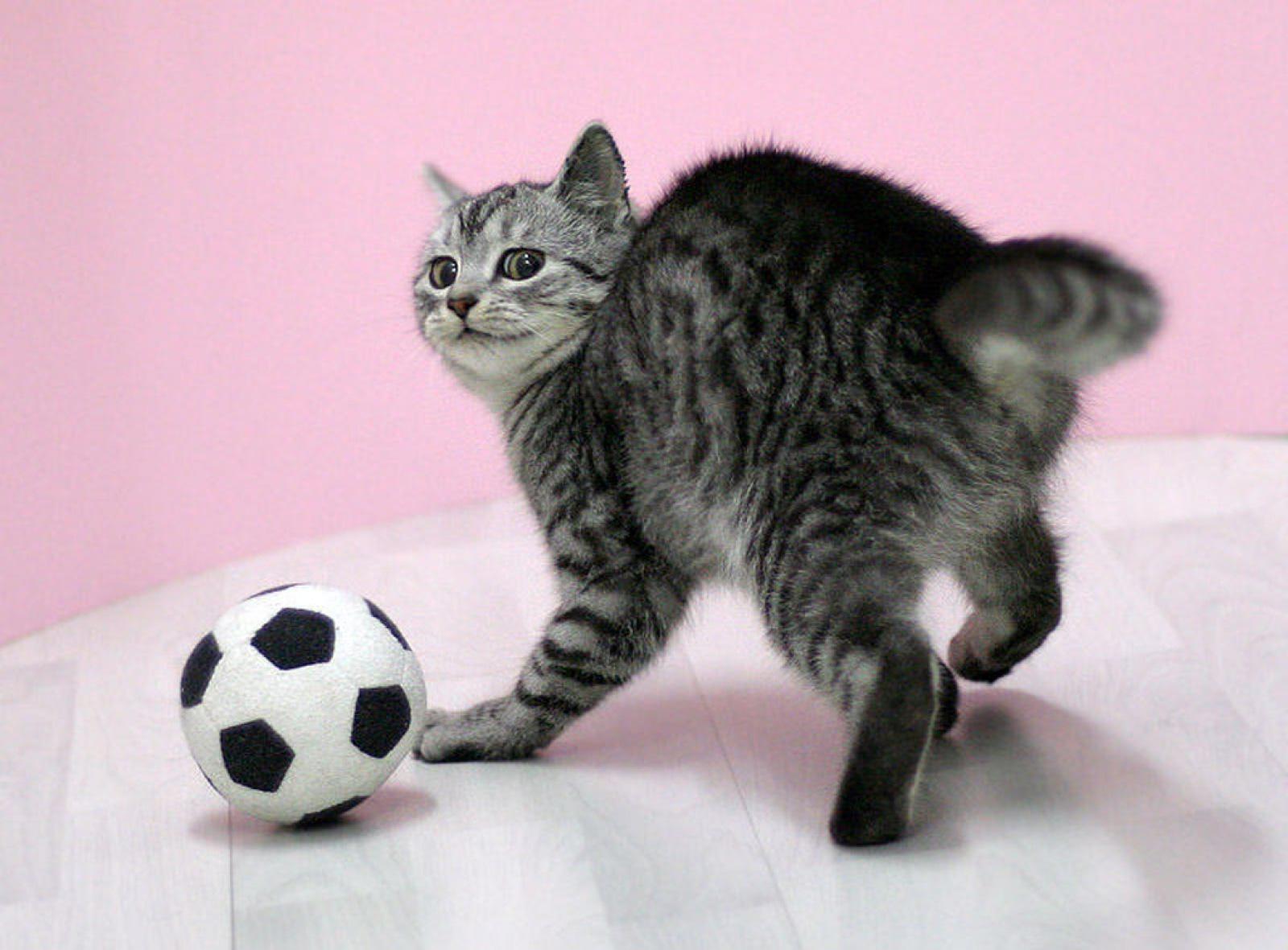 des-chats-tous-mignons