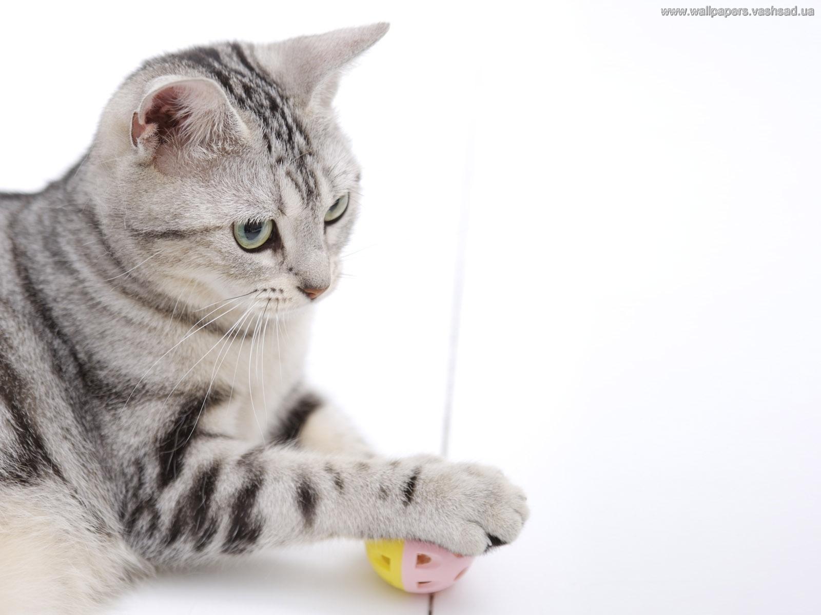 des-chats-tous-mignons_02