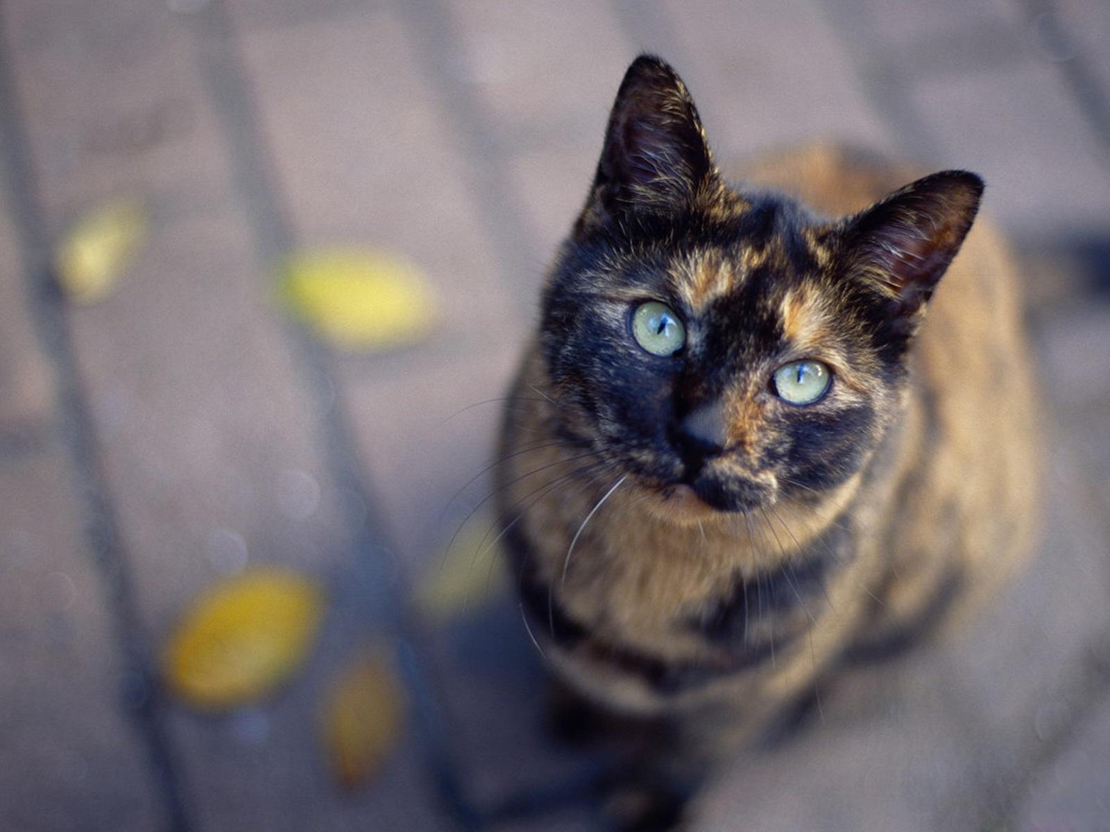 des-chats-tous-mignons_03