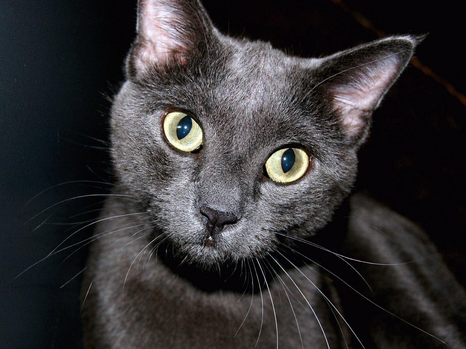 des-chats-tous-mignons_04