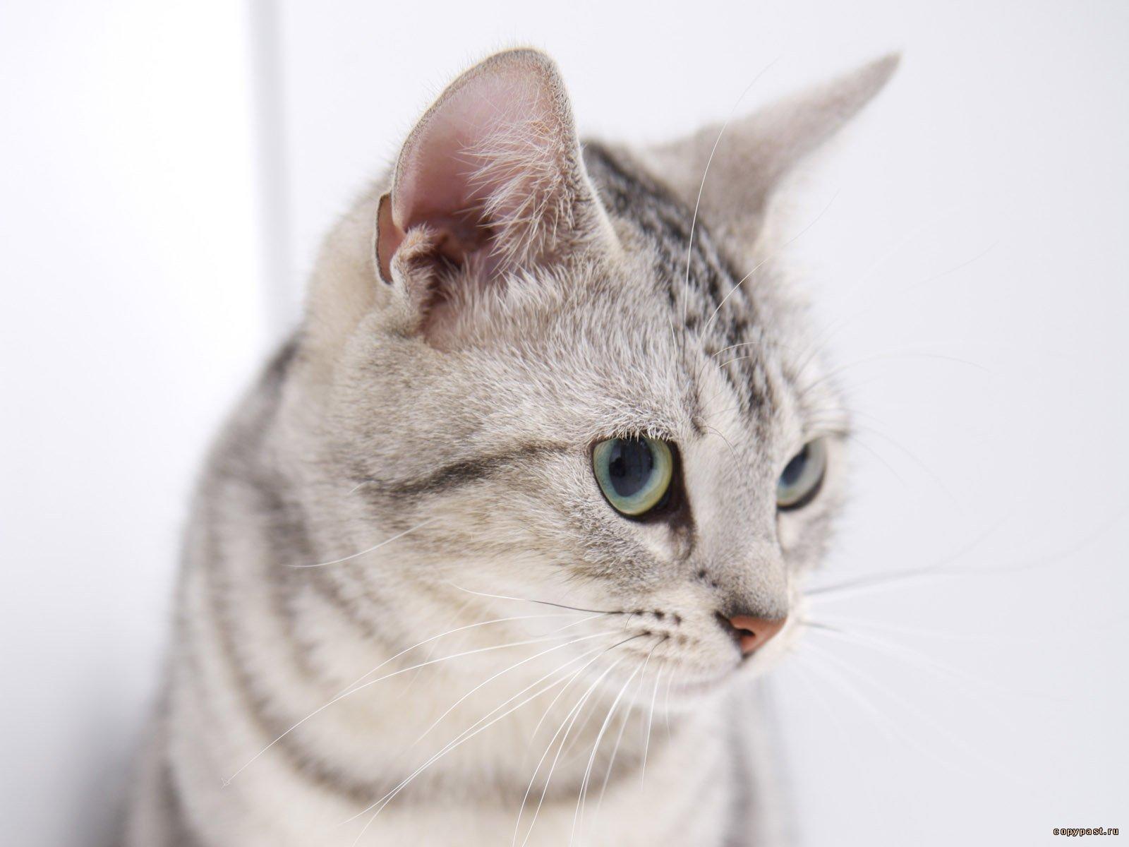 des-chats-tous-mignons_06
