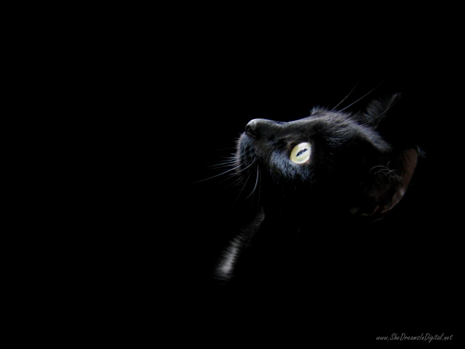 des-chats-tous-mignons_07