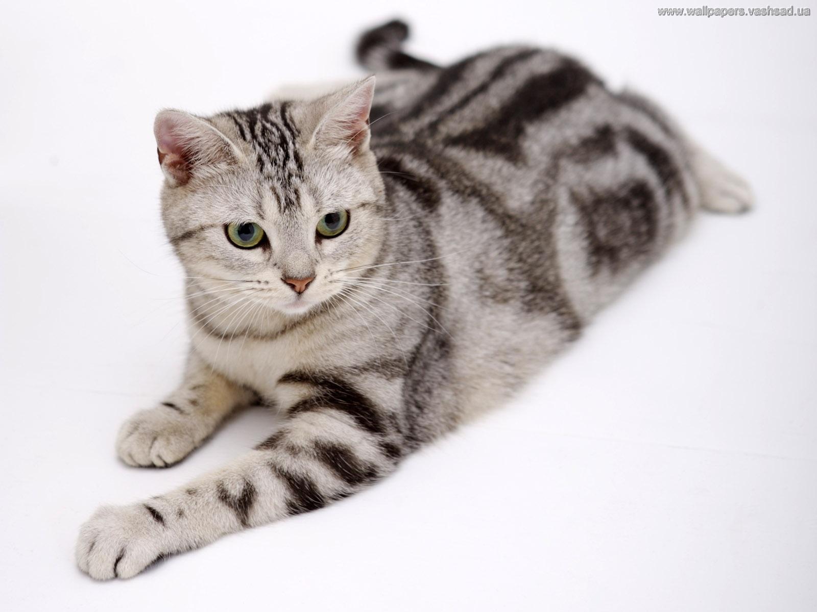 des-chats-tous-mignons_08