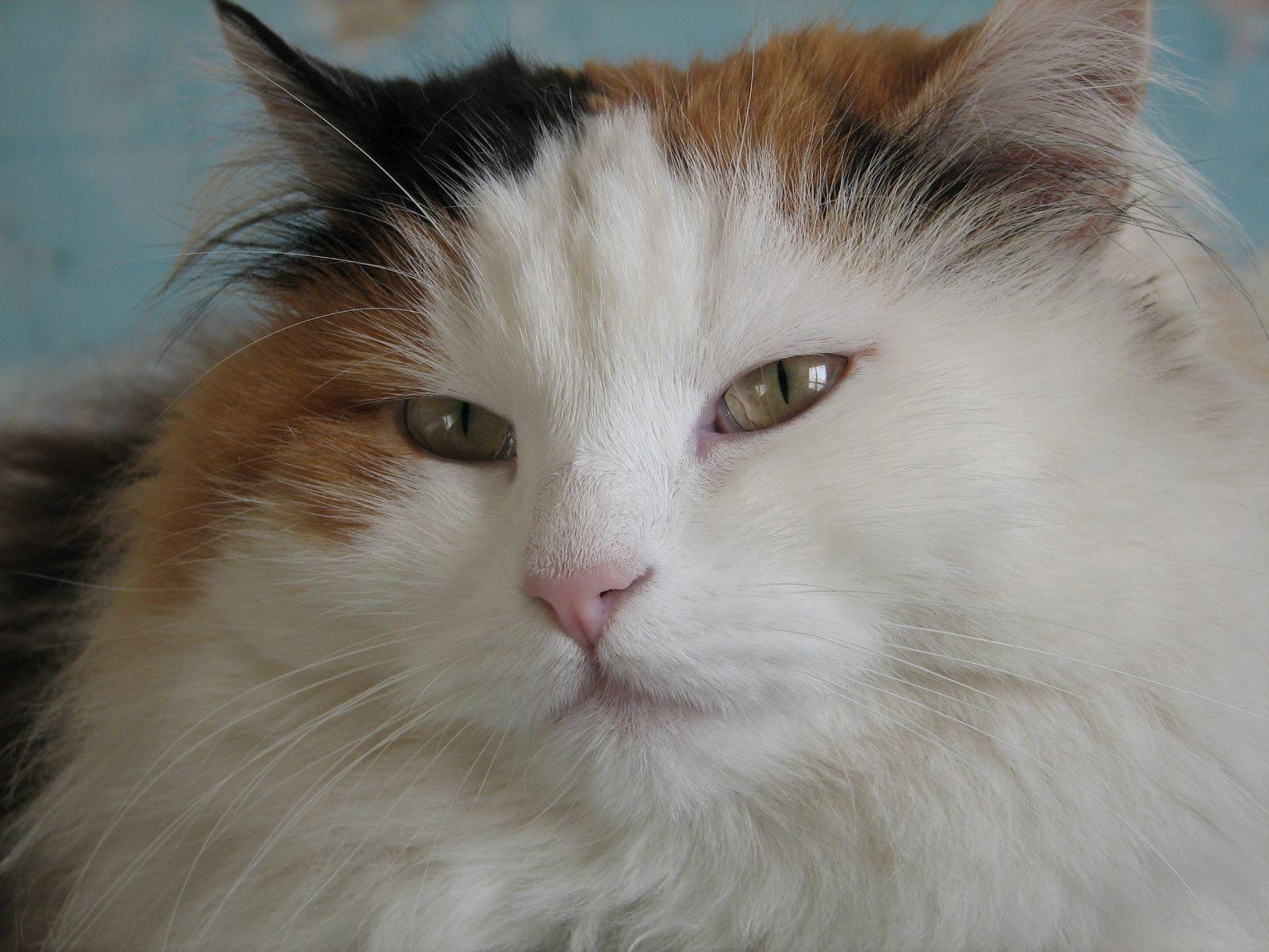 des-chats-tous-mignons_09
