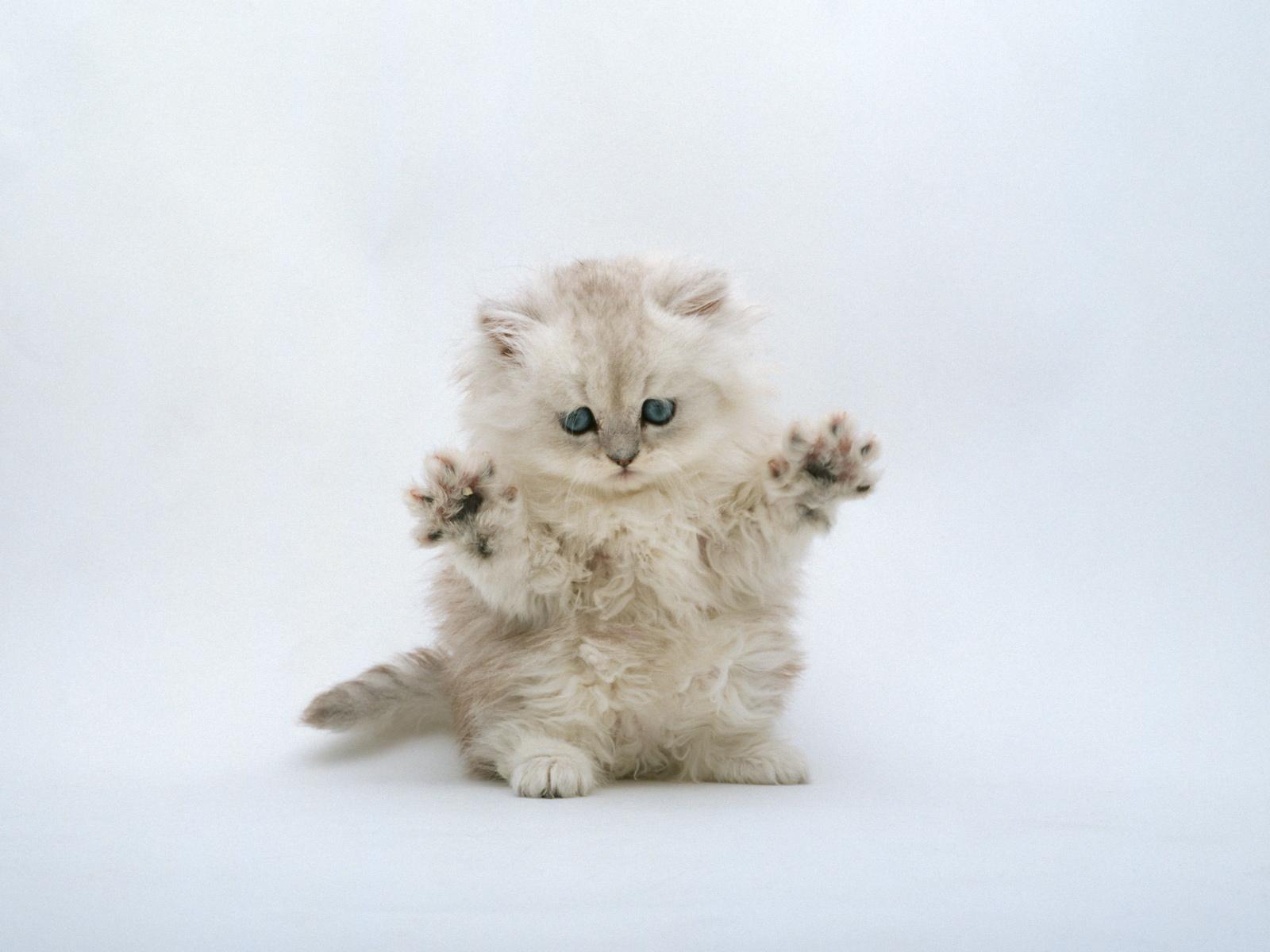 des-chats-tous-mignons_11