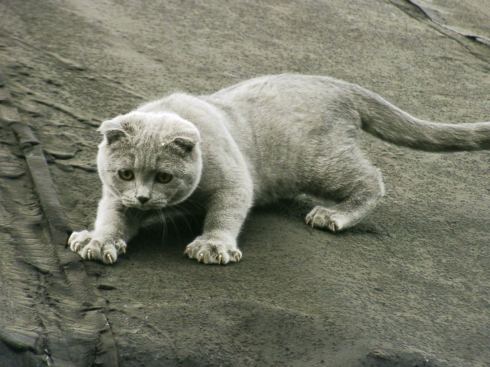 des-chats-tous-mignons_13