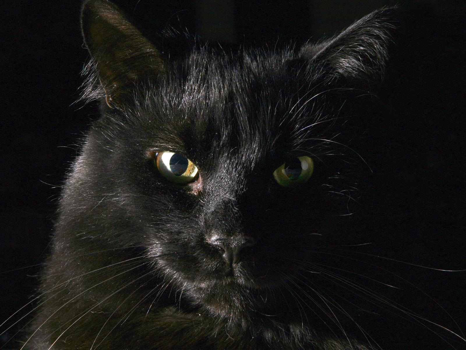des-chats-tous-mignons_16
