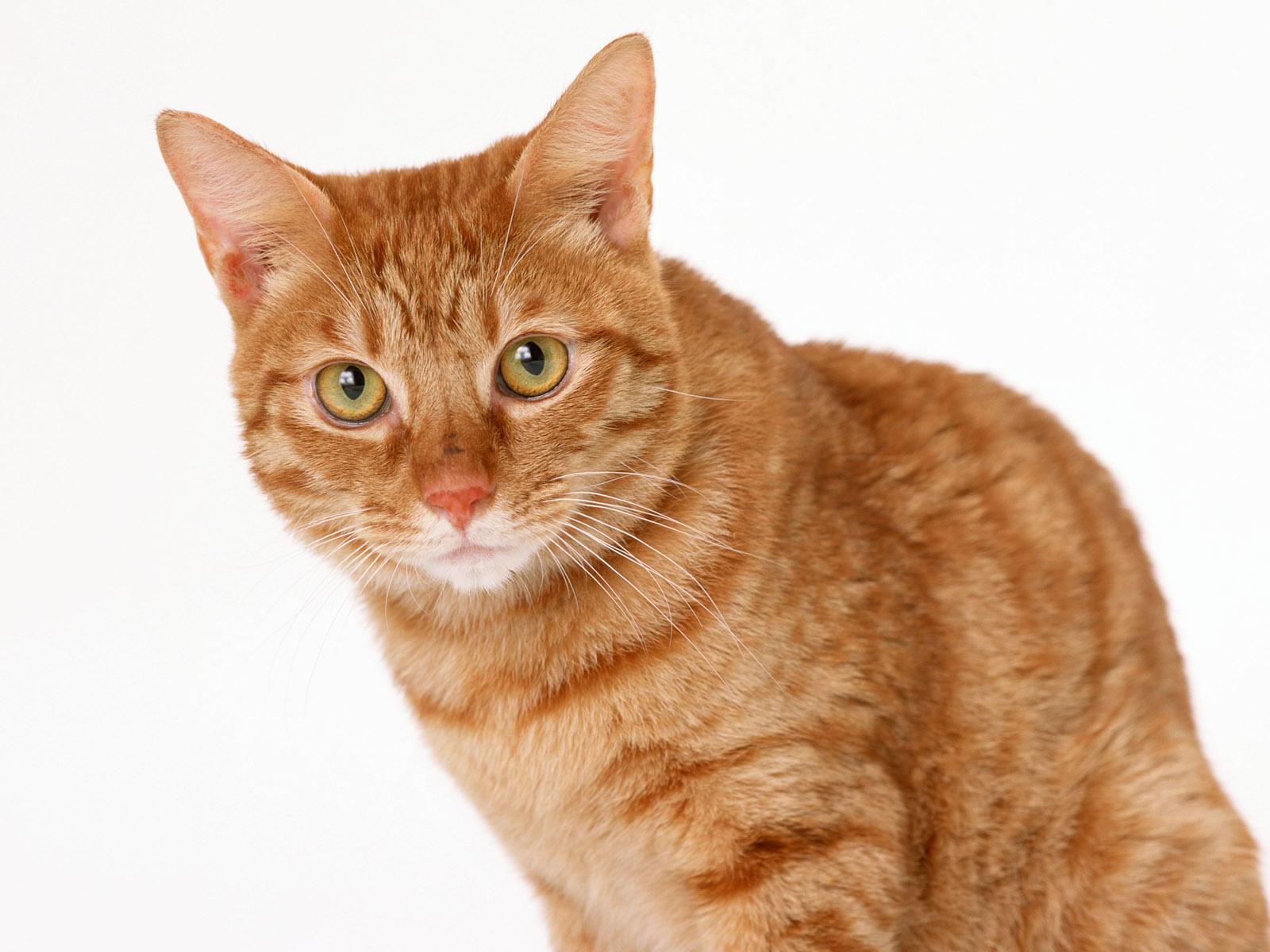 des-chats-tous-mignons_17