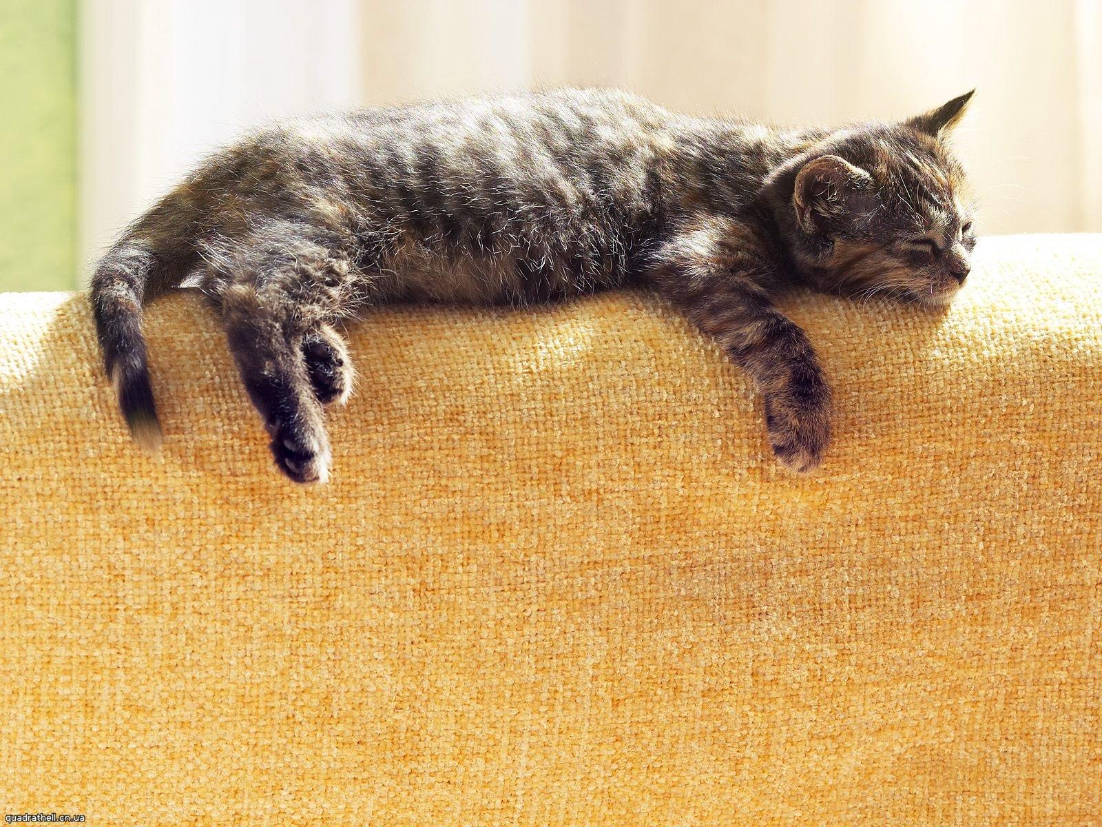 des-chats-tous-mignons_18