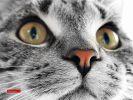 des-chats-tous-mignons_19
