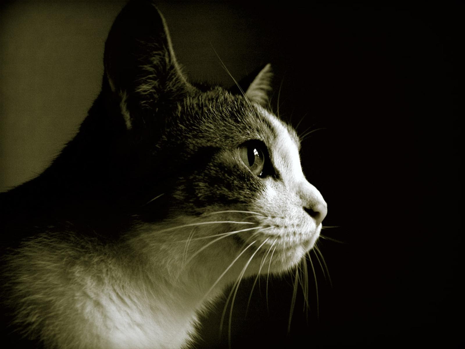 des-chats-tous-mignons_20