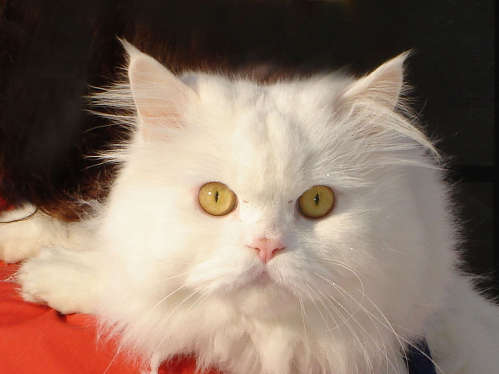 des-chats-tous-mignons_21