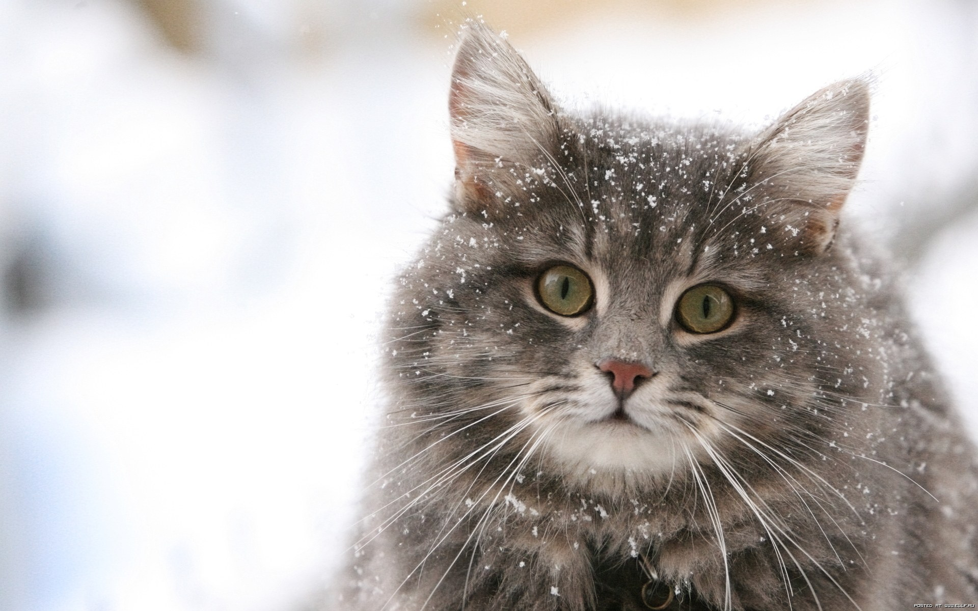 des-chats-tous-mignons_22