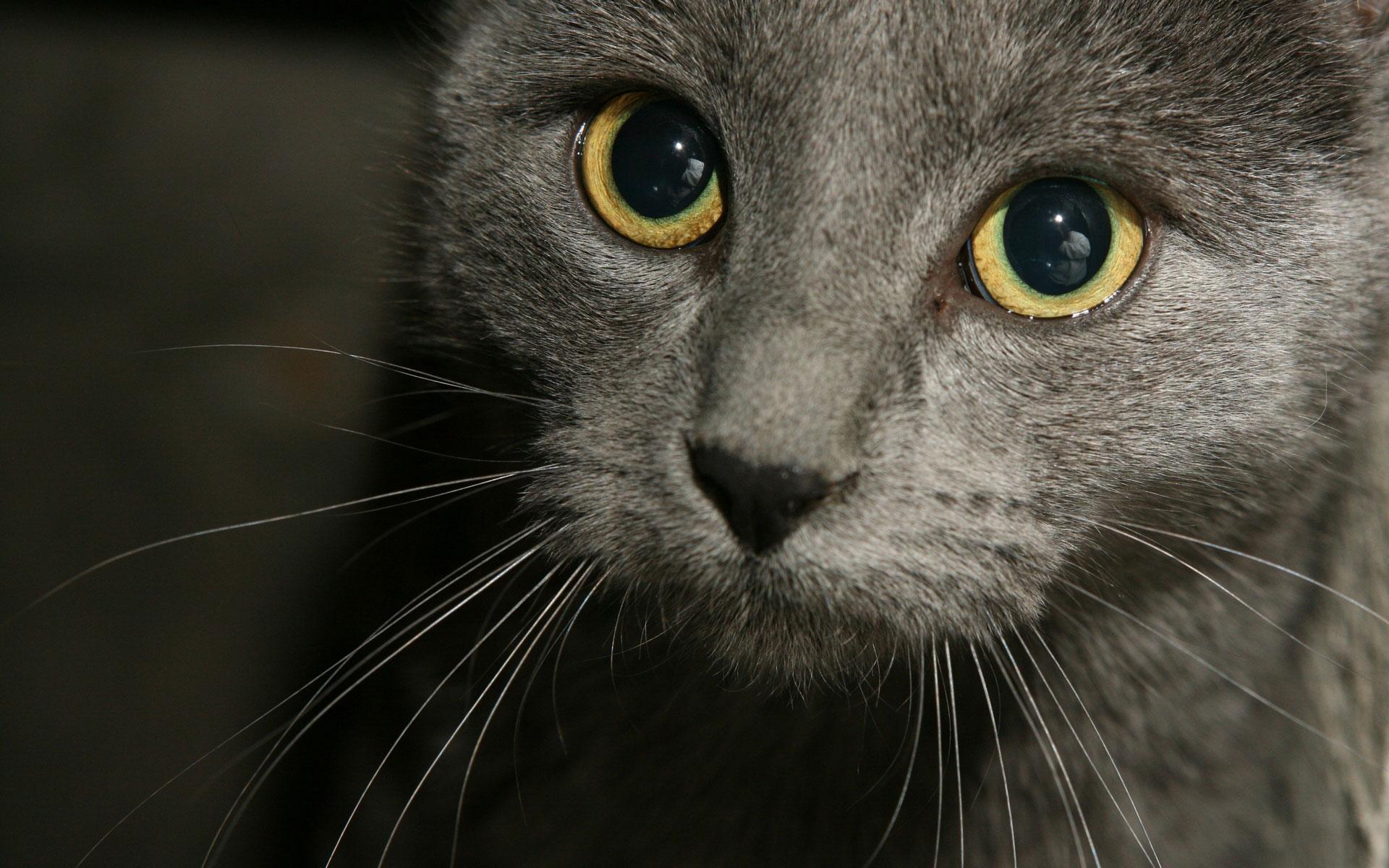 des-chats-tous-mignons_23