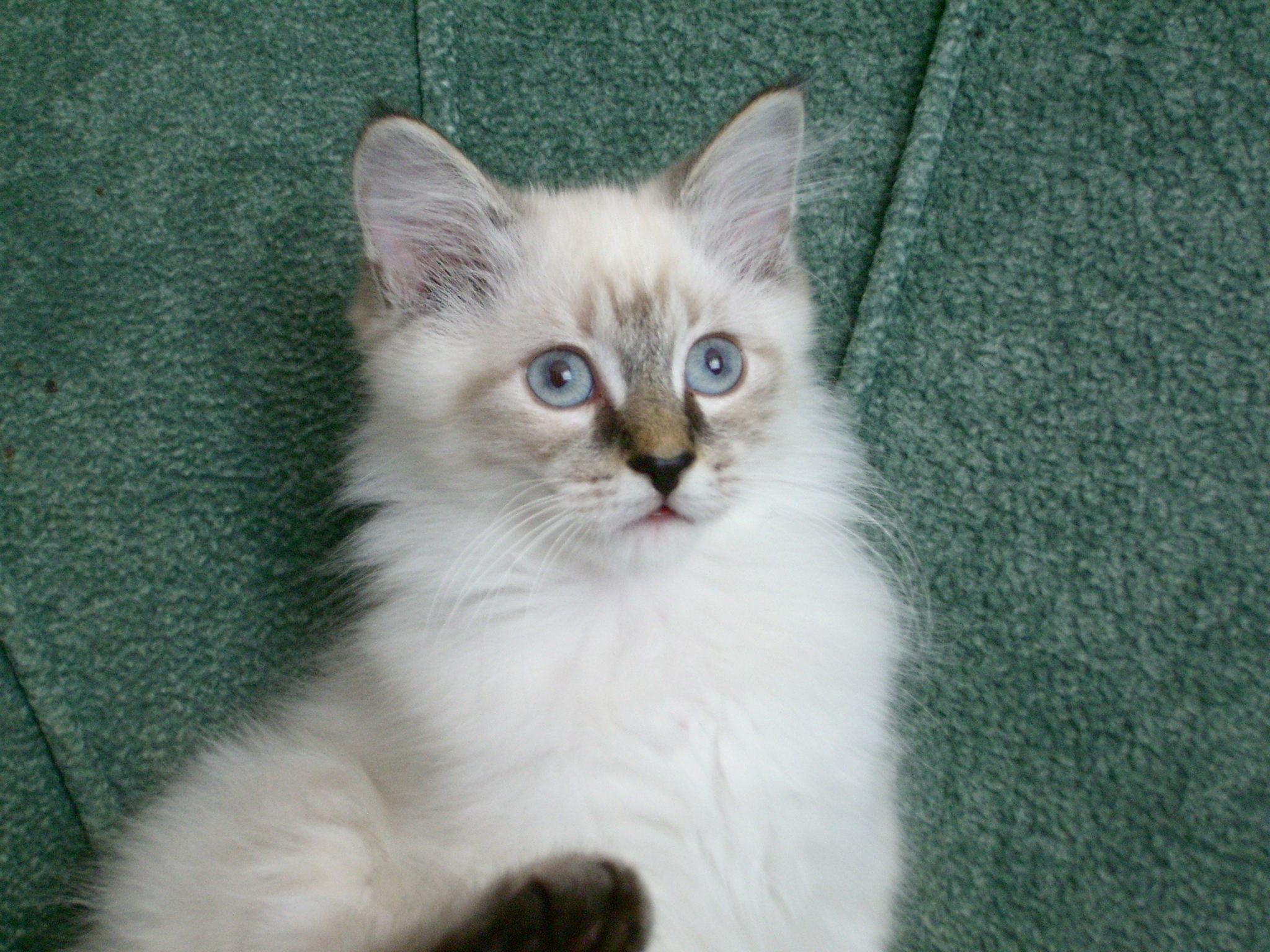 des-chats-tous-mignons_25