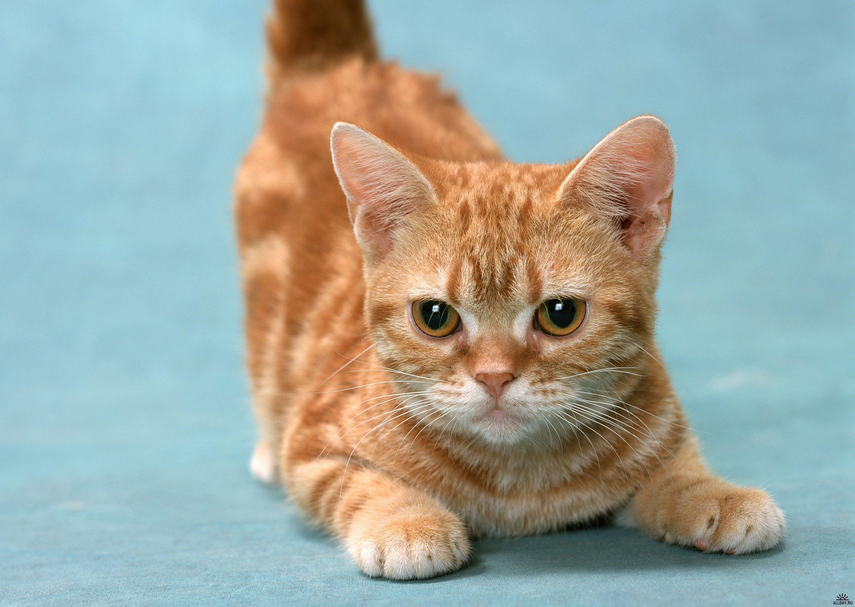des-chats-tous-mignons_26