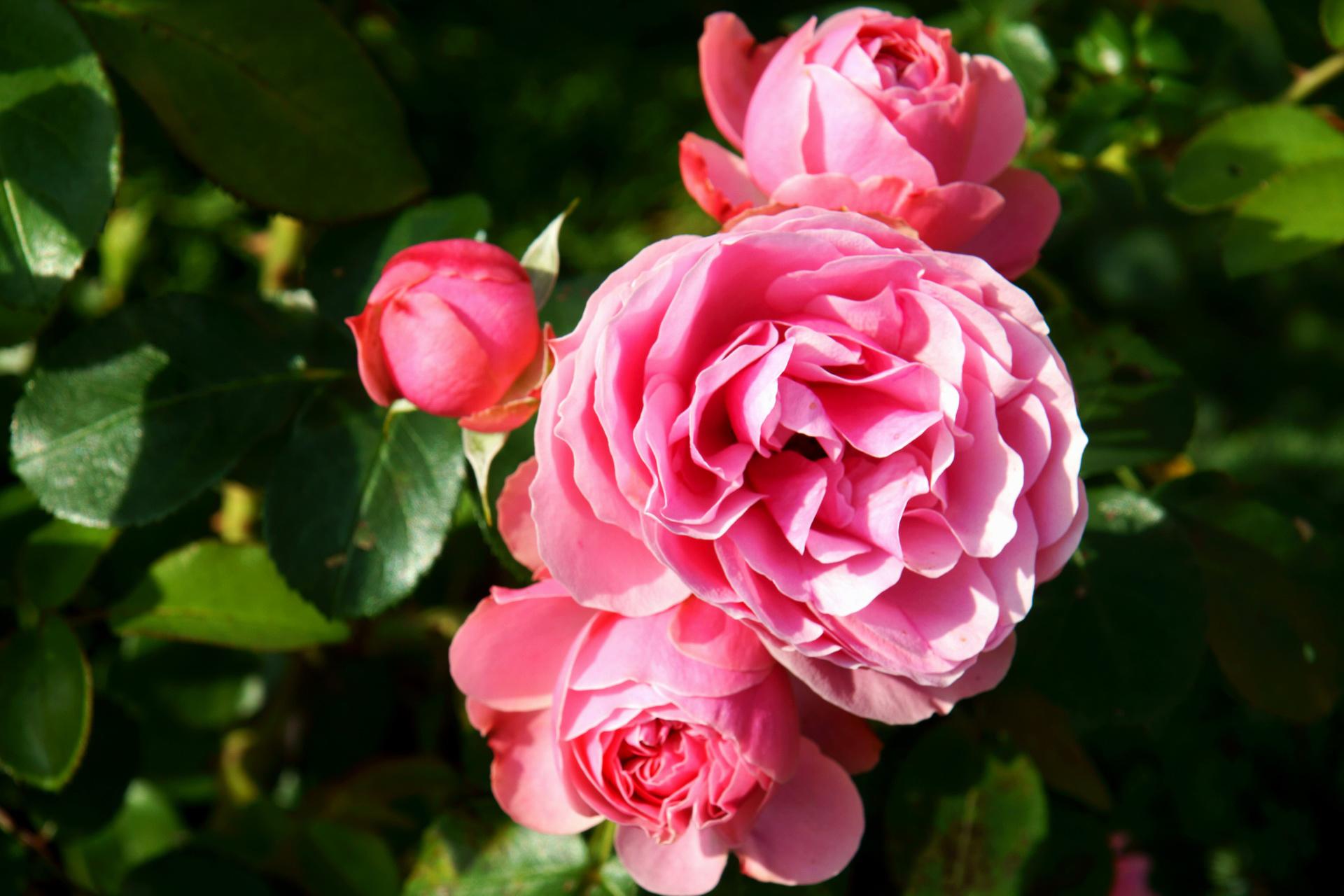 bouquet-de-fleurs