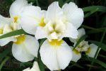 bouquet-de-fleurs_02