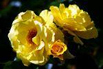 bouquet-de-fleurs_03
