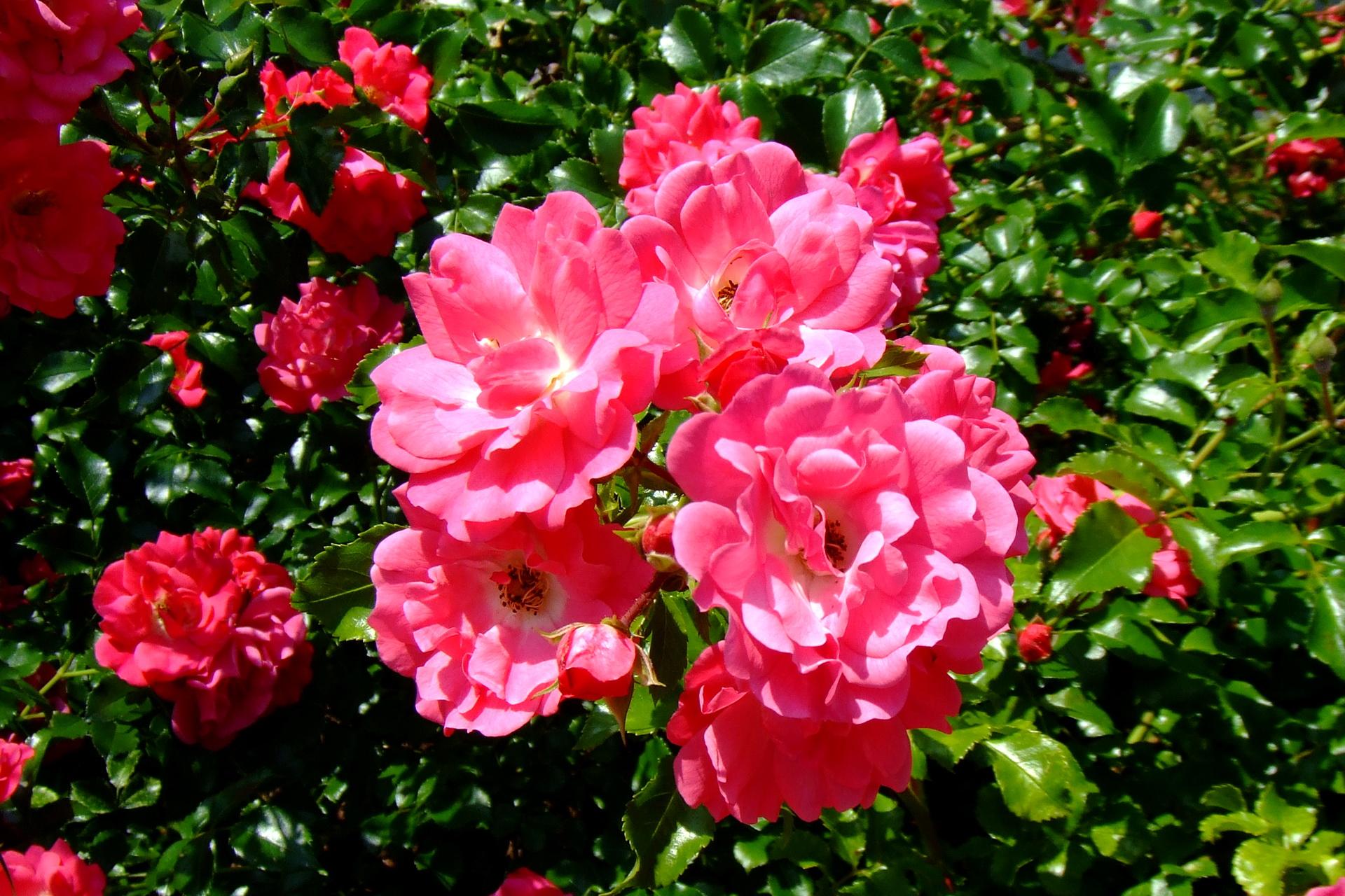 bouquet-de-fleurs_04