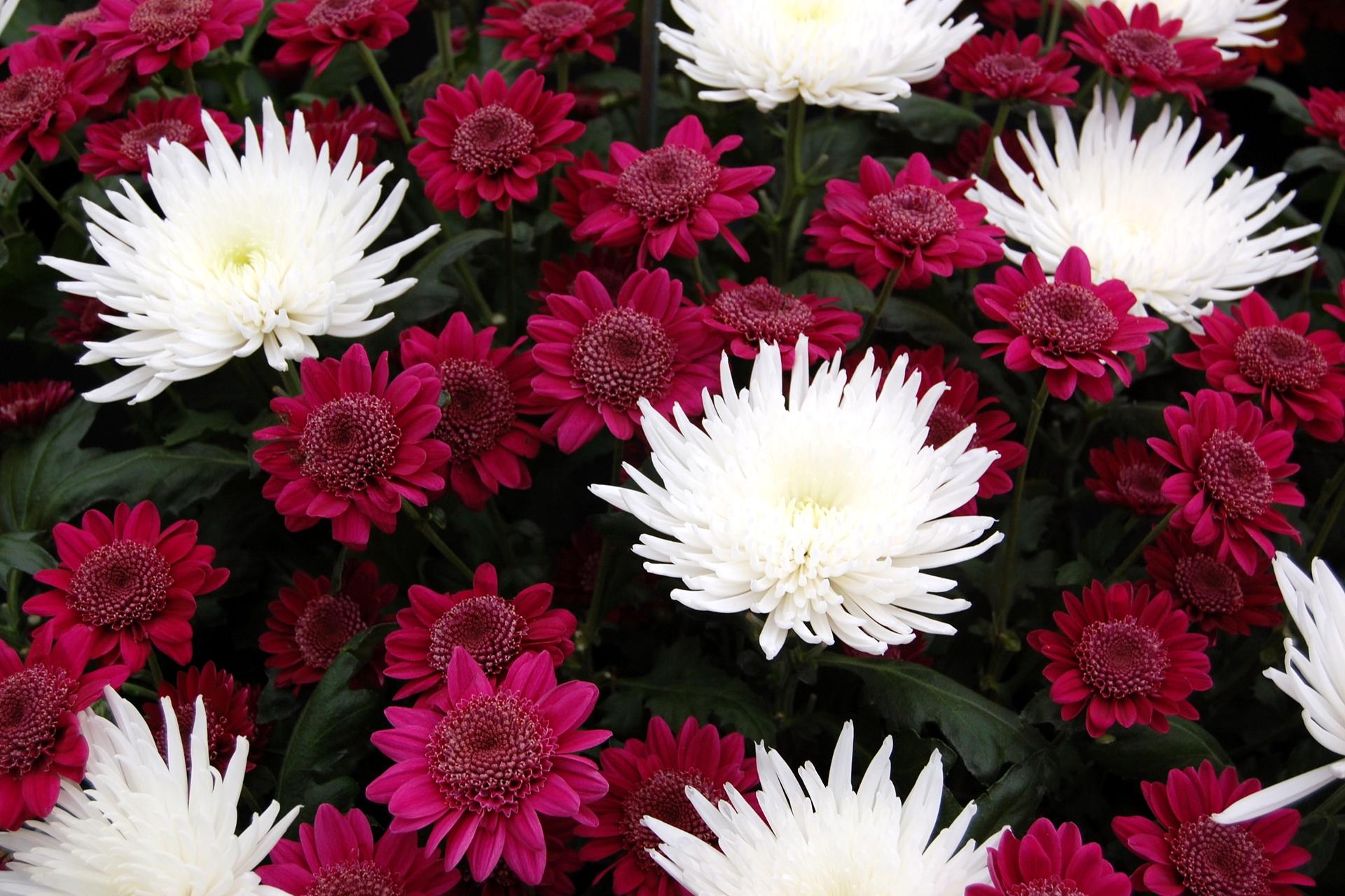 bouquet-de-fleurs_05