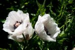 bouquet-de-fleurs_06