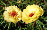 bouquet-de-fleurs_07