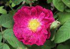 bouquet-de-fleurs_08