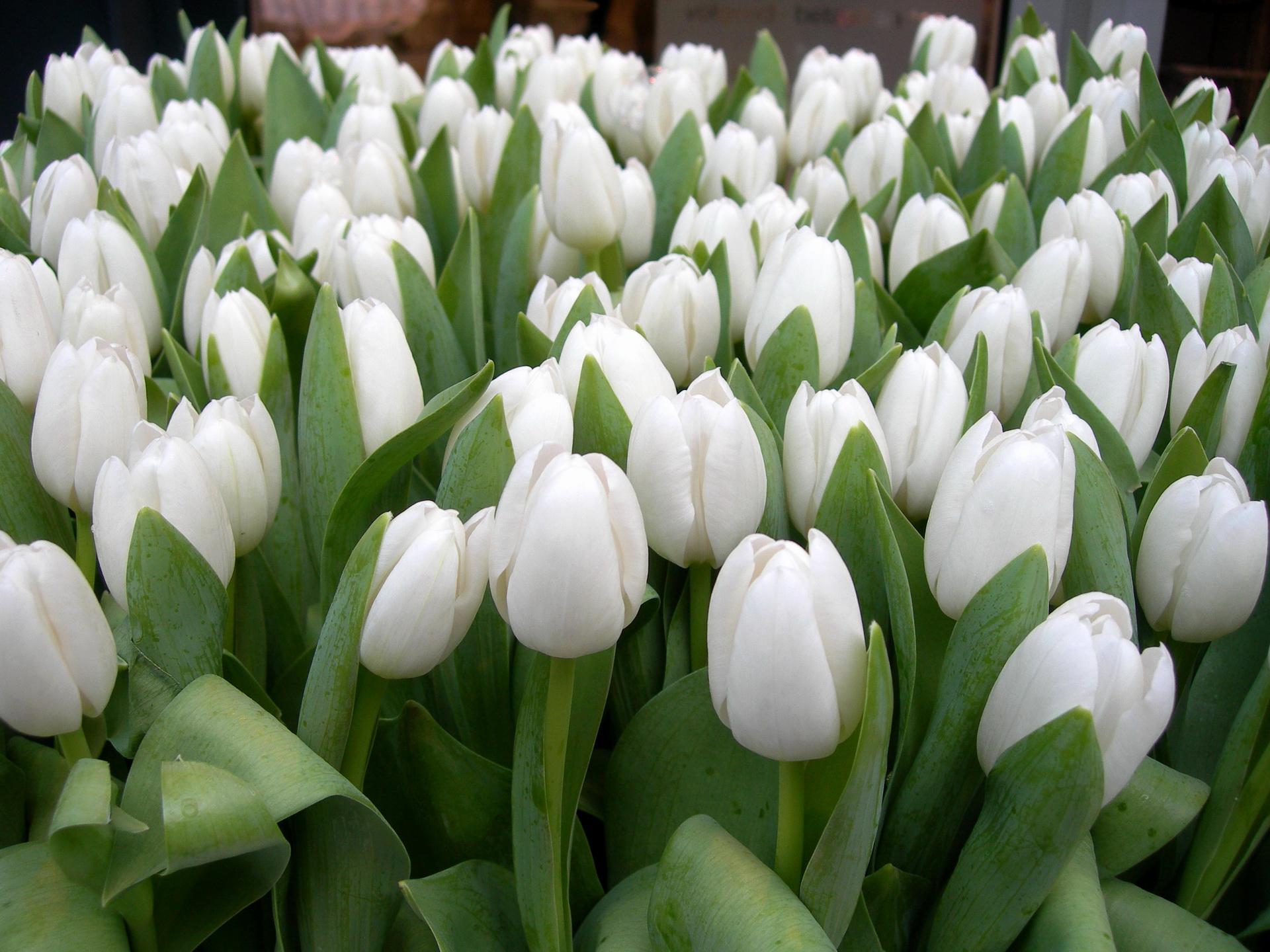 bouquet-de-fleurs_10
