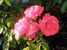 bouquet-de-fleurs_11