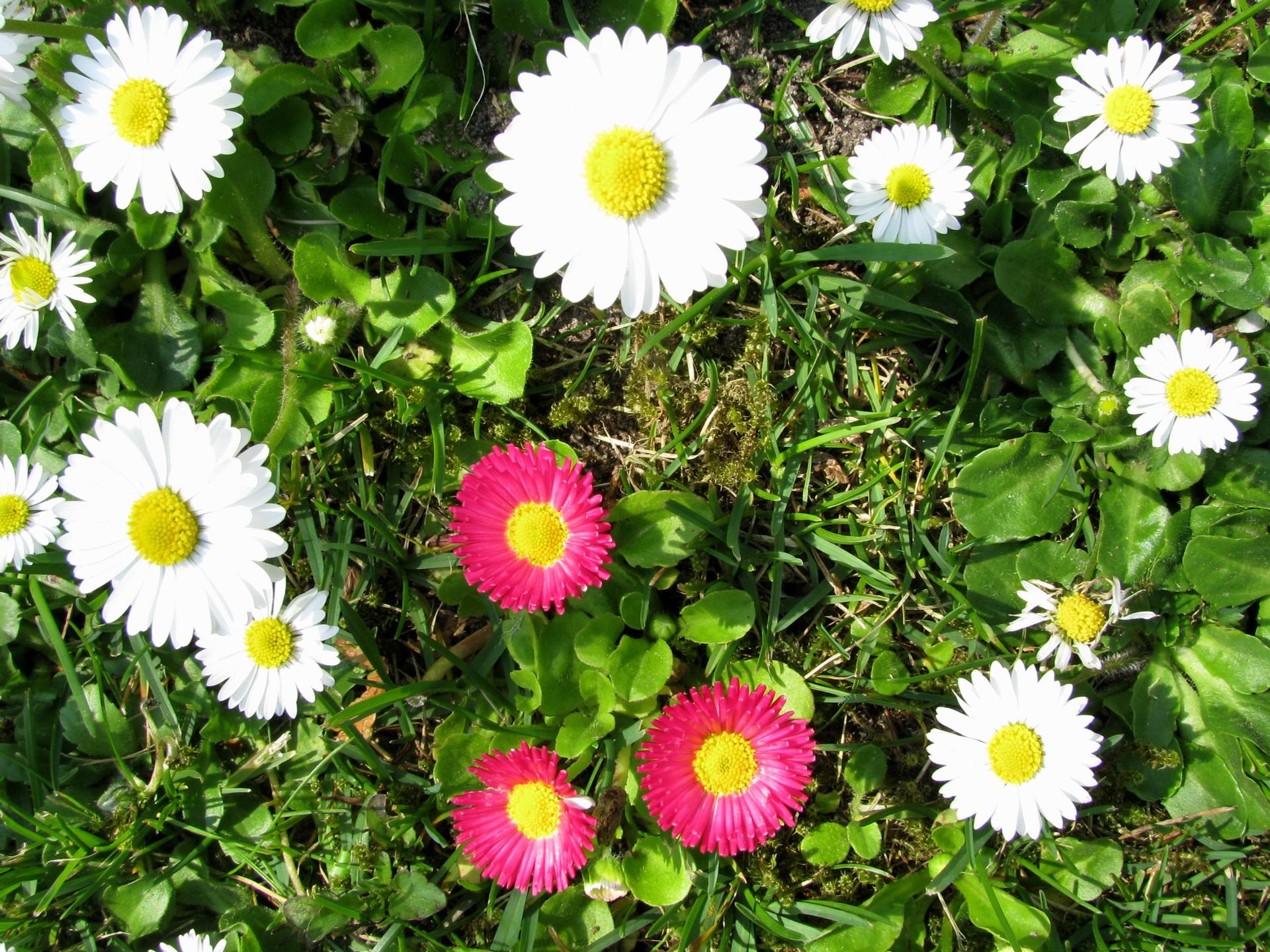 bouquet-de-fleurs_12