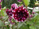 bouquet-de-fleurs_13