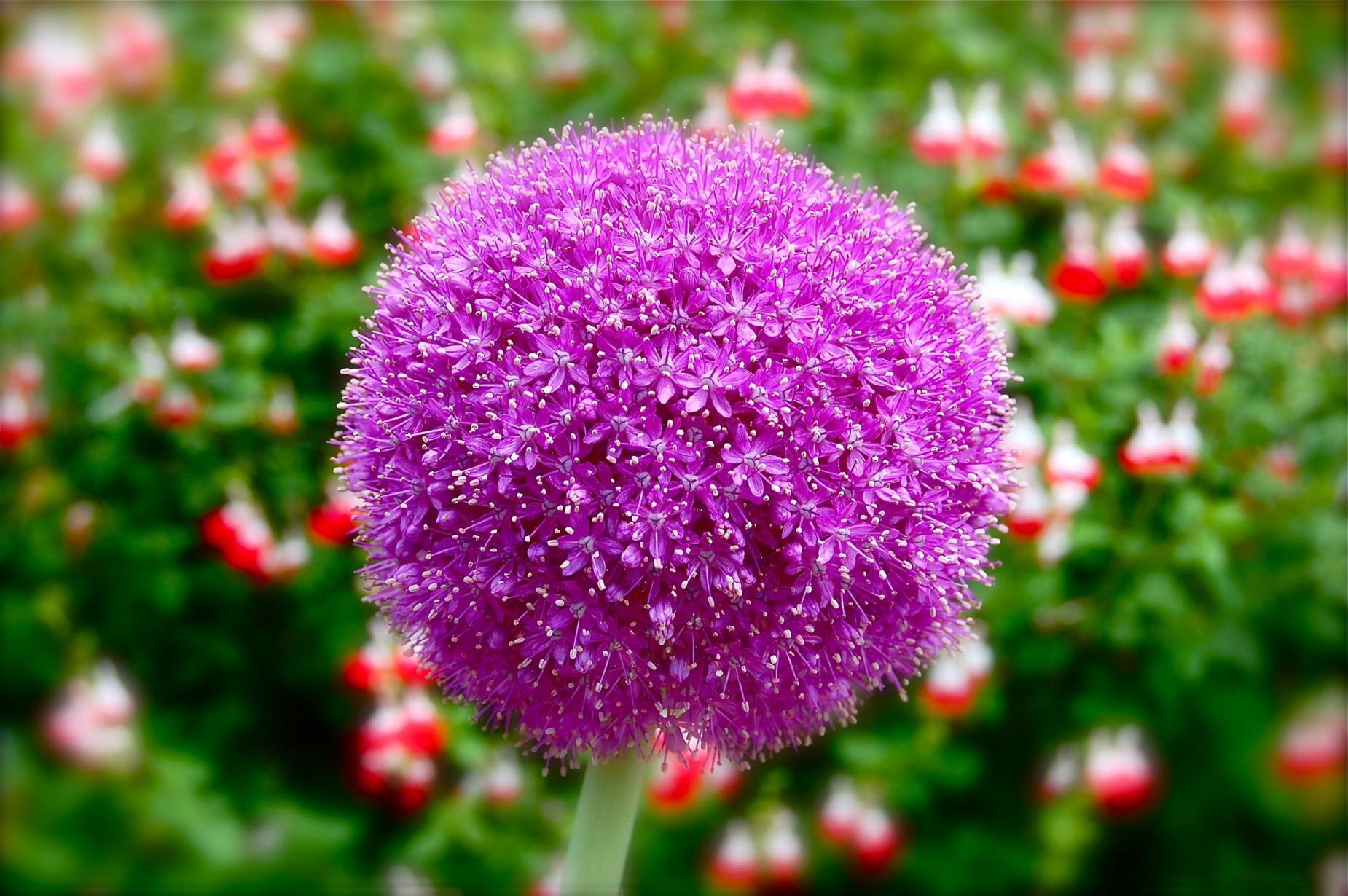 bouquet-de-fleurs_14