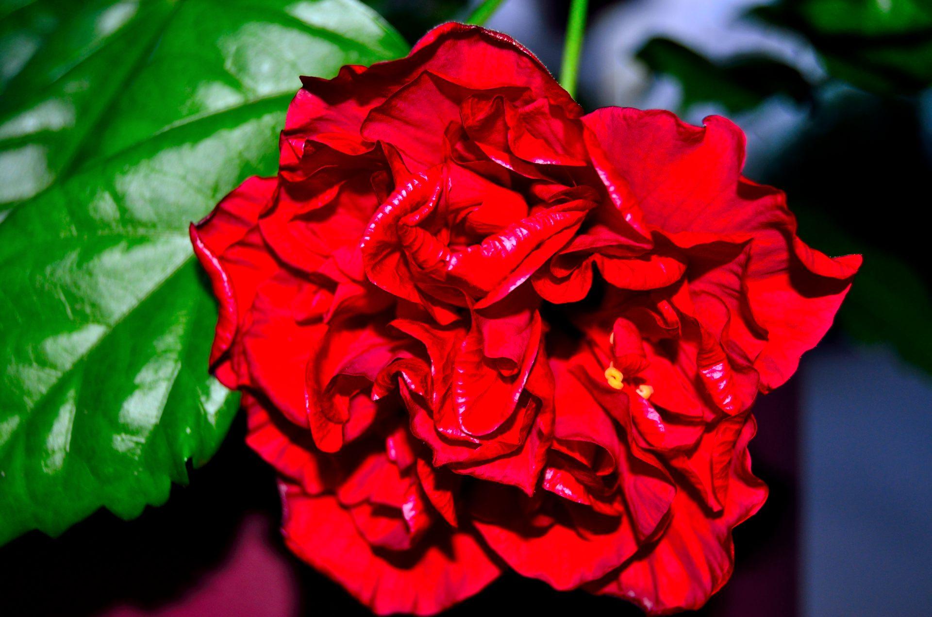 bouquet-de-fleurs_15