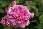 bouquet-de-fleurs_16