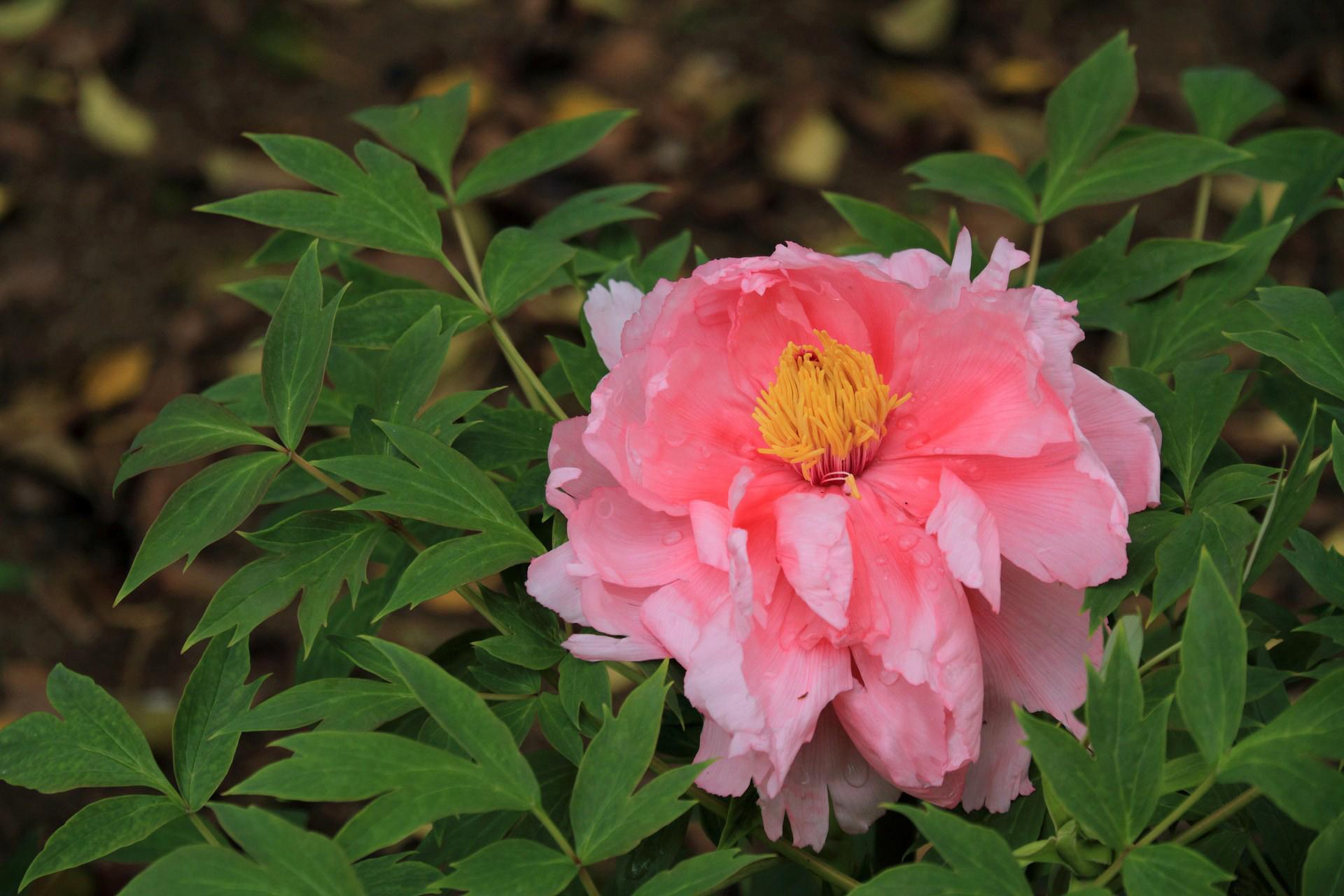 bouquet-de-fleurs_17