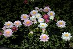 bouquet-de-fleurs_18