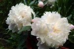 bouquet-de-fleurs_21