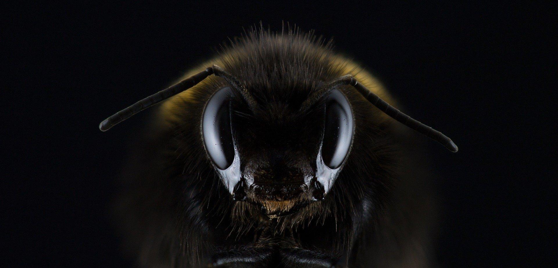 diable-noir-macro-photo