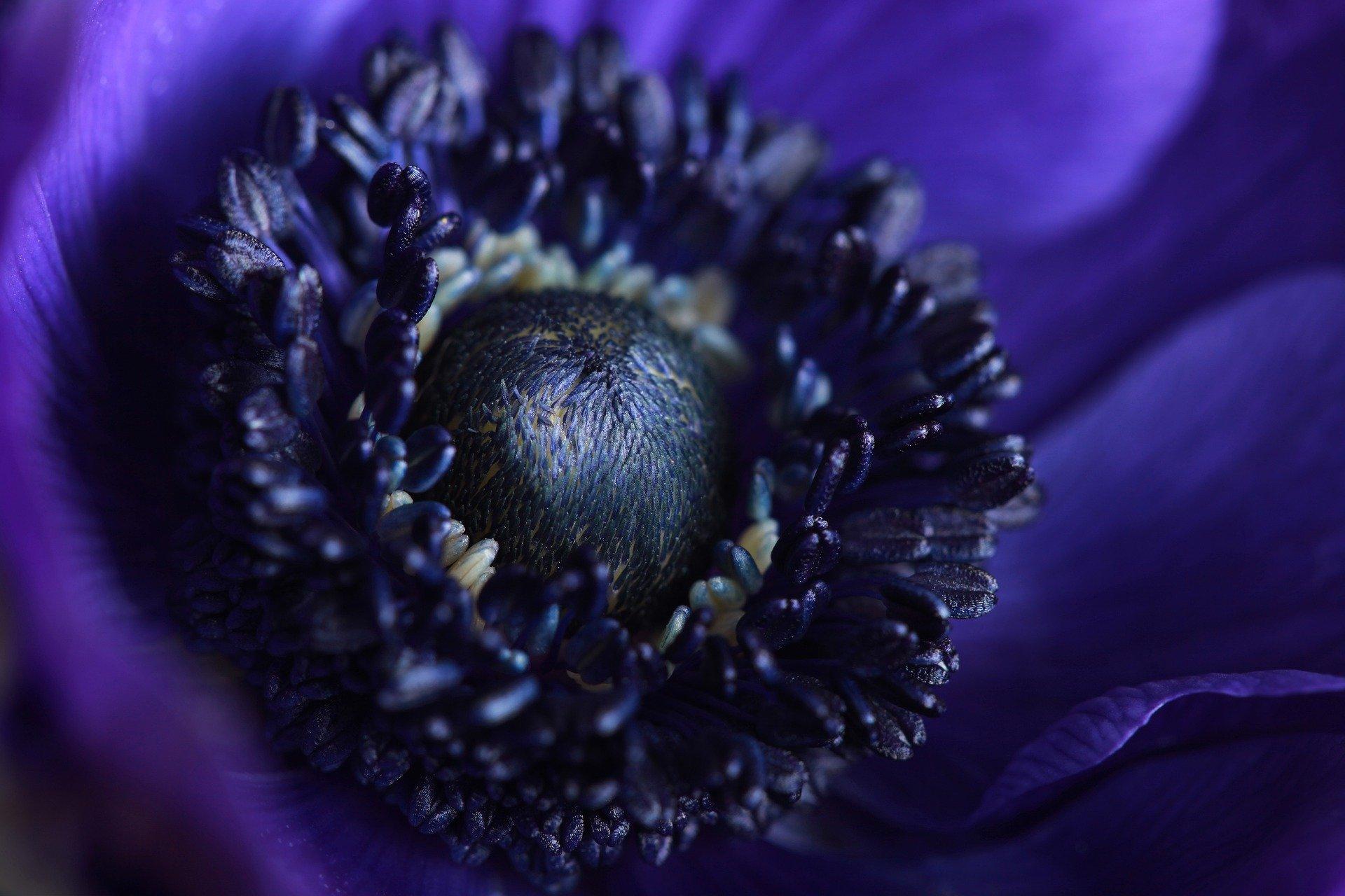 fleur-bleue-macro-phototographie