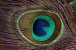 plumage-macro-zoomer