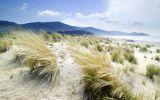 dunes-et-vegetation-litoral-italie