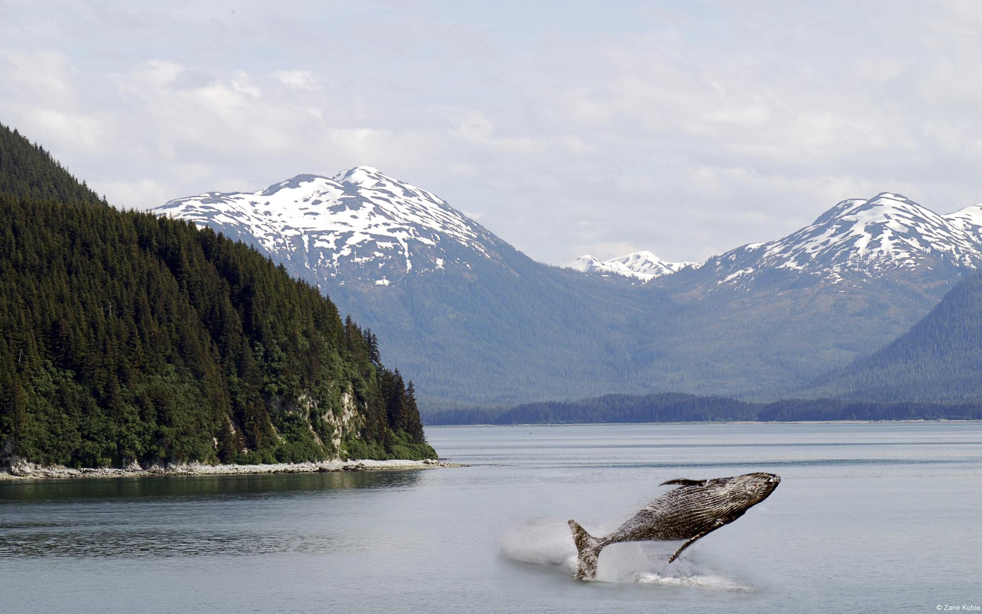 partir-en-voyage-rencontrer-les-baleines