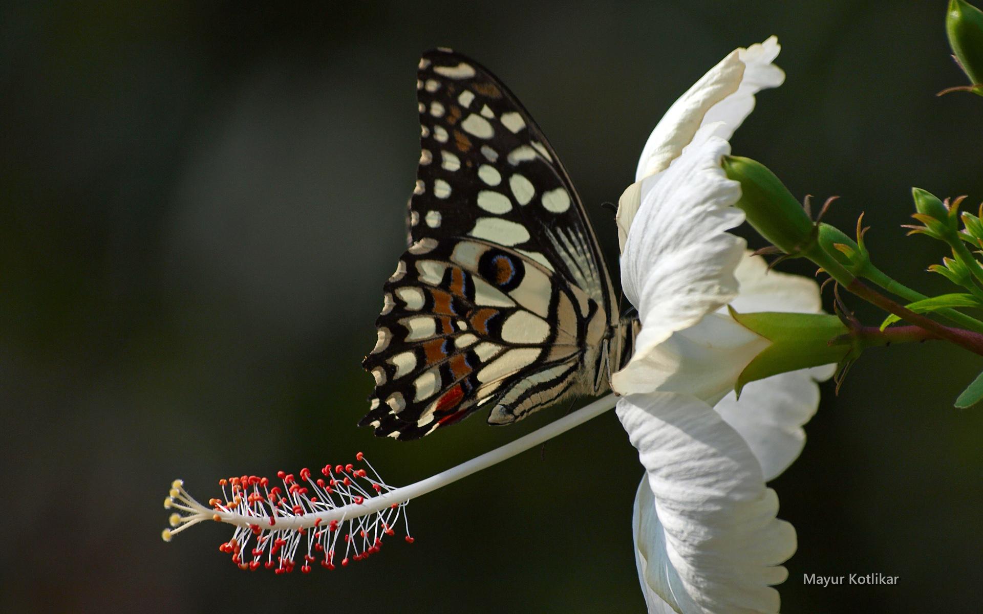 beaute-des-ailes-colorees