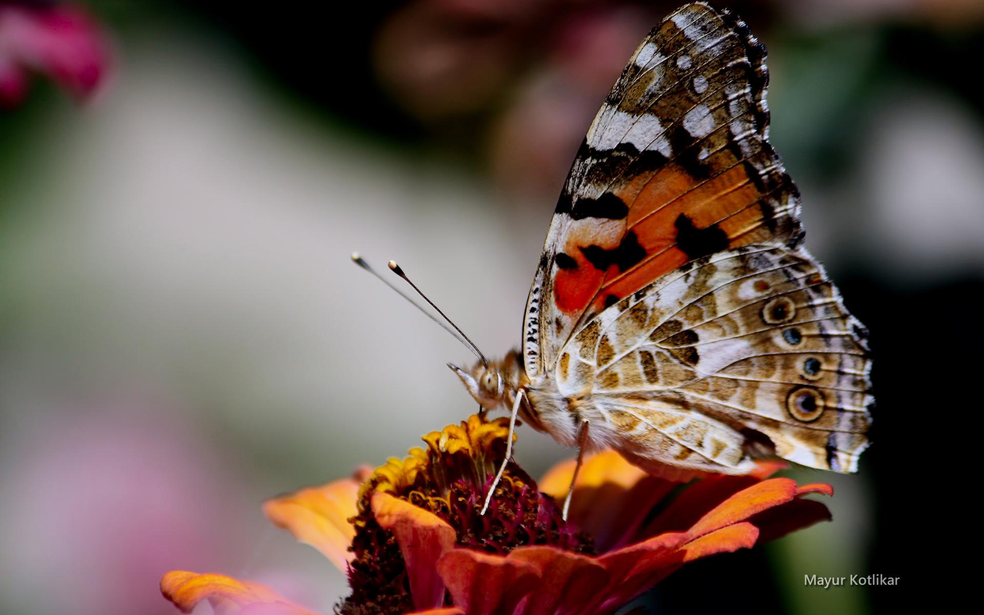 beaute-des-ailes-colorees_02