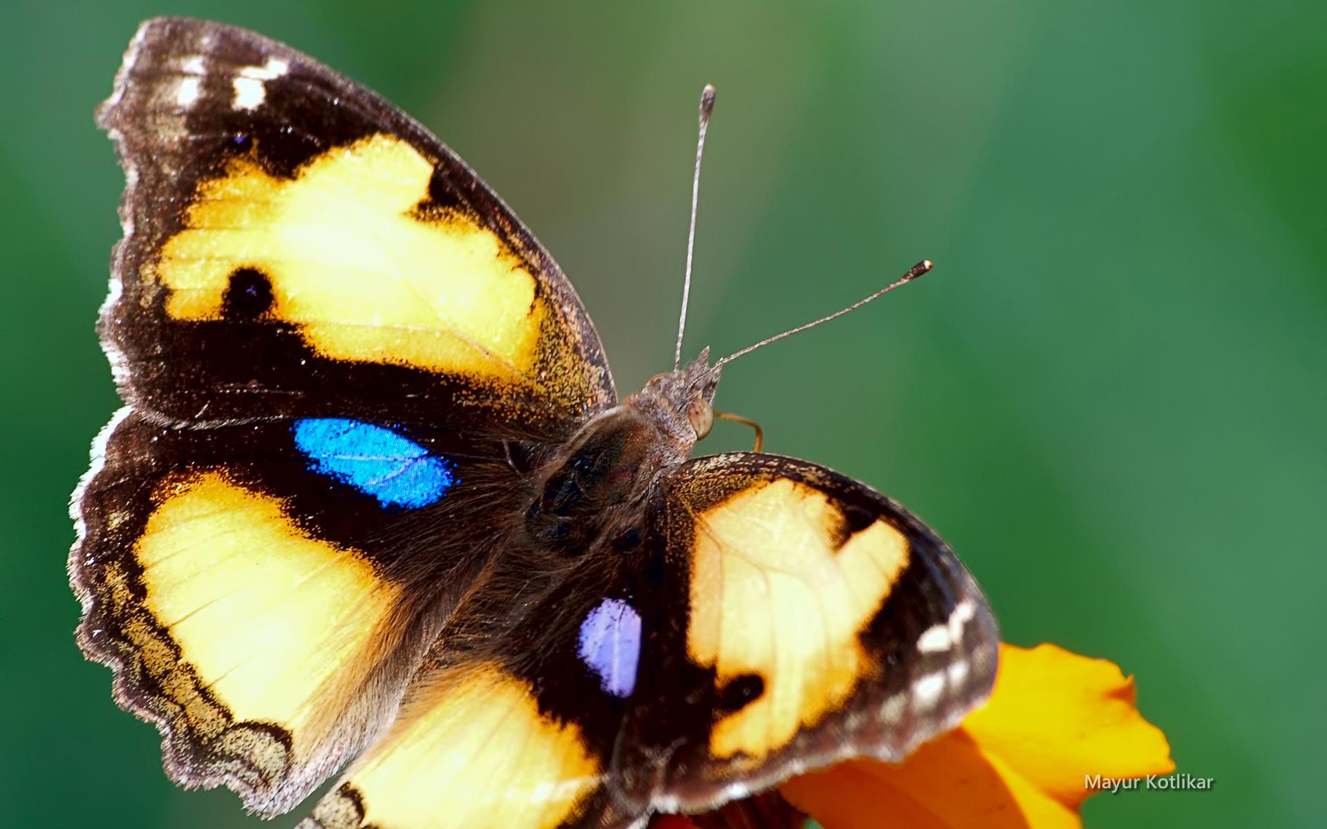 beaute-des-ailes-colorees_03