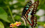 macrophoto-nature-et-papillon