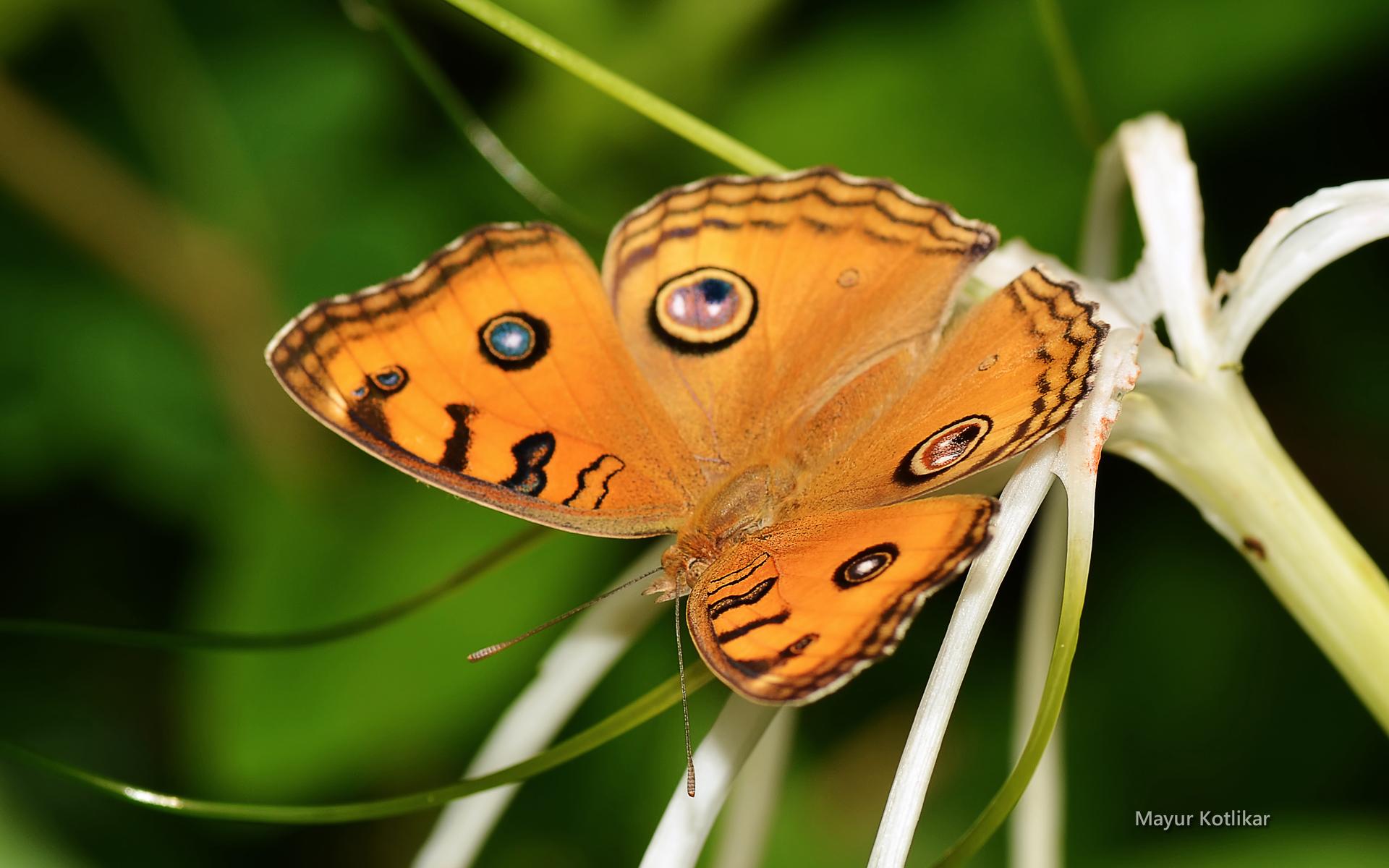 macrophoto-nature-et-papillon_02