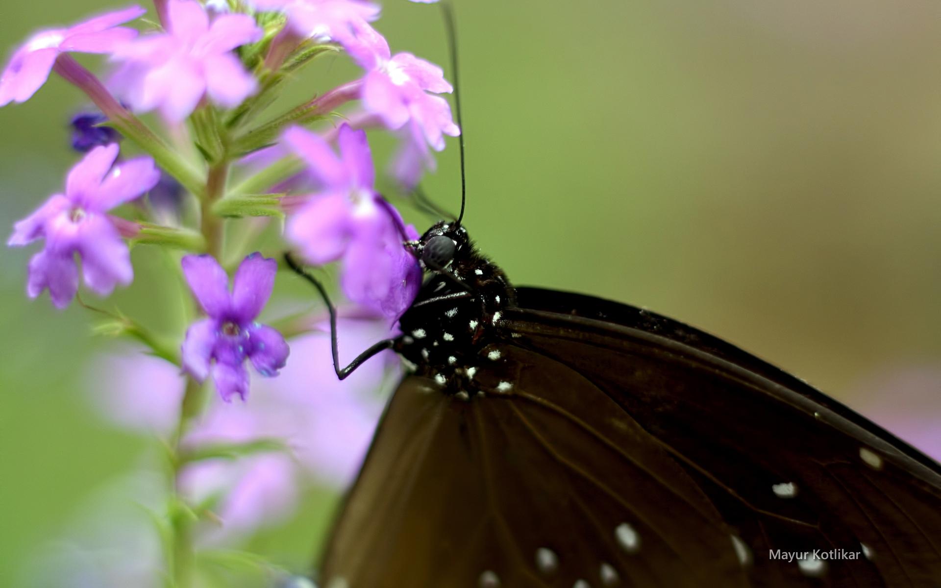 macrophoto-nature-et-papillon_03